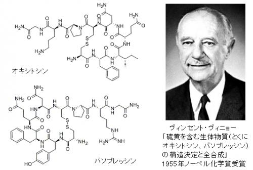 第55回ノーベル化学賞 ヴィンセント・ヴィニョー、「硫黄を含む生体 ...